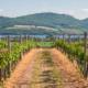 Vineyard Social Media Strategy